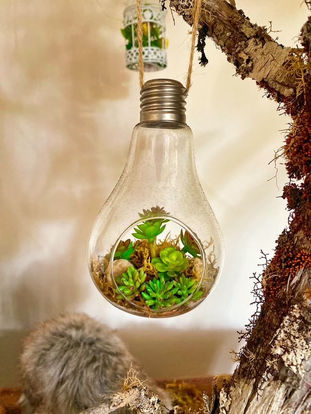 xero bookkeeping services - plant in lightbulb